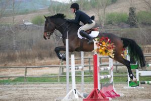 Show Jumping - 8 by Silver-Stock-Images
