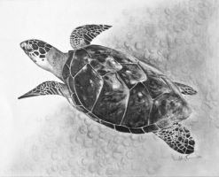 sea turtle by AllieRaines