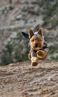 My doggy running 3 by AlieNdwa