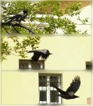 Crows: Trajectory by nihilist1
