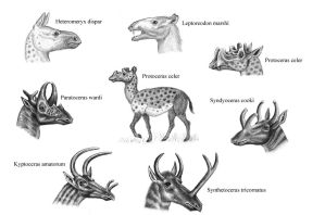 Protoceratids by WillemSvdMerwe