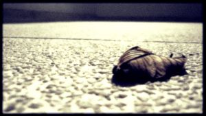 Solitary Shell by Drunkerman