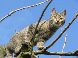 Toby on a tree 1 by Sanae78