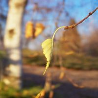 yellow leaf by erin-margaret