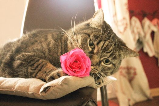 A rose for you by frimmi