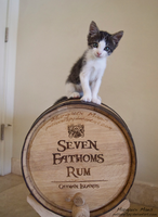 Seven Cathoms Rum by PetLoverSpy