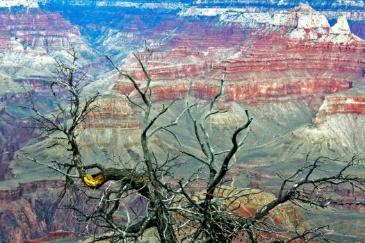 Grand Canyon 158 2015 by Moppet-Smiles