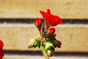 Red flower with Bee. Nikon D80 by TonistL
