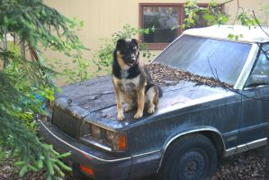 Gus, King of the Cadillac by Flyinkit