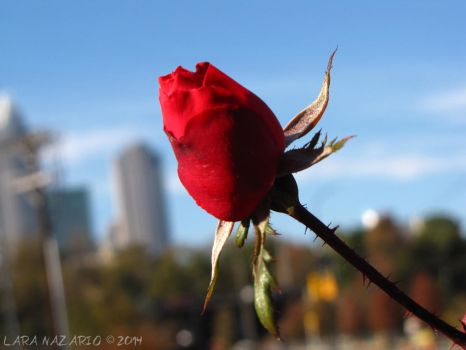 A Lone Flower in the City by thenazarios