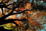 Underneath the Acer Tree by Gerard1972