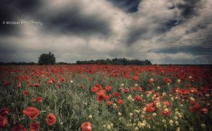 Poppy field by Piroshki-Photography