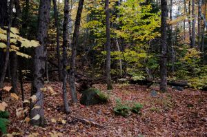 White Mountains  Fall Foliage  085 by FairieGoodMother