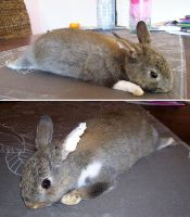 Brown Soft Mount Bunny Commission by DeerfishTaxidermy