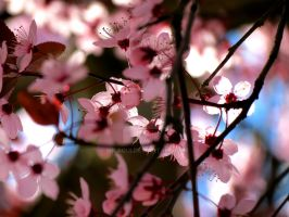 Colors of Spring by Milaqui