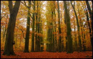 Under the autumn beeches by jchanders