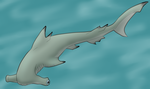 Scalloped Hammerhead Sunday by Pamuya-Blucat