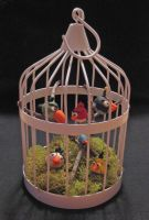 My Angry Birdcage by lani-enigma