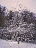 snowy little tree by kayleighOMG