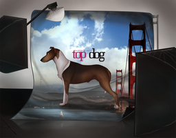 Next Top Dog Stage 2 by CanineConspiracy
