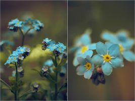 ..: Forget-me-not :.. III by Katosu