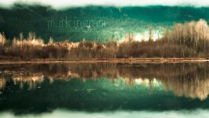 Forest for the Trees by Mark-Ingram