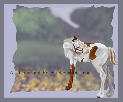 Ransom Foal - First Grand by Rosela