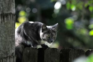 Prowling by NB-PhotoArt