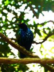 Superb Starling by WildsidePhotos