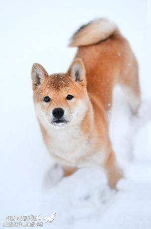 Sachi and her first snow by Allerlei