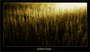 Golden Grain by Dimits
