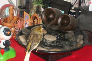 Pajarito on the fountain by butterfly1980