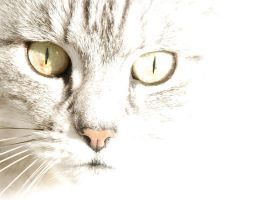 Cat in white by aleania