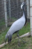 Tautphaus Zoo 5 Bird by Falln-Stock
