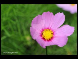 flower a17 by liviugherman