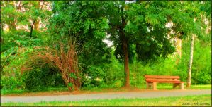 A Bench in The Park by ValdesBG