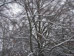 Snow on the Trees again by Cyberpriest