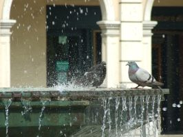pidgions taking a shower by Boolpropenacheats