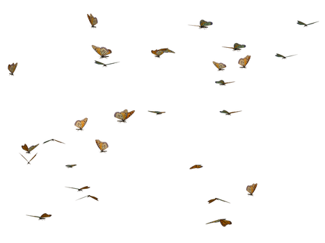 Butterfly Swarm 02 PNG Stock by Roy3D