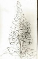 Botany sketches 2 by BlueMajorelle