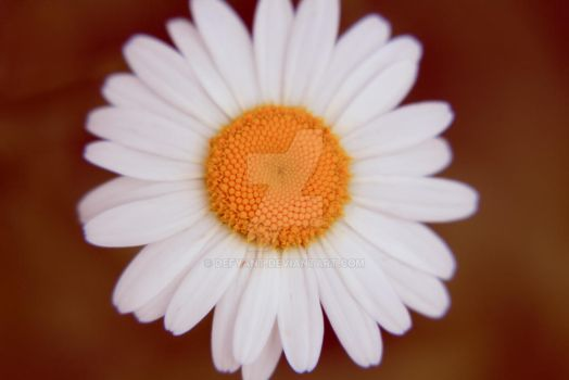Daisy by dEfyant