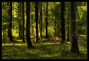 Enchanted forest by JoInnovate