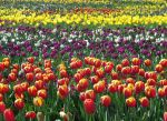 Floriade 1 by Typthis
