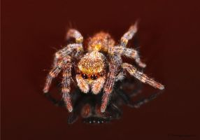 jumping spider 7 extended by Prototyps