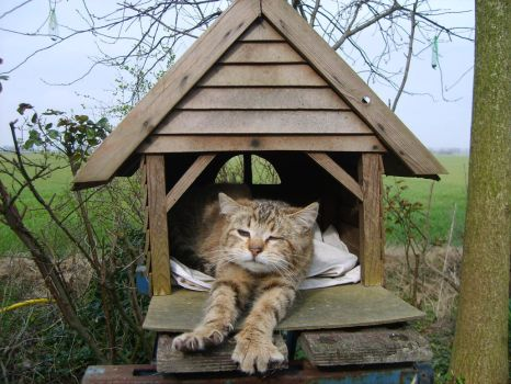 cat in birdhouse 3 by muthership