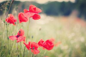 Poppy in love by FotosEingefangen