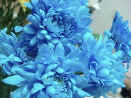 Blue flowers by horsea9