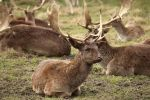 Deer Stock 25 by Malleni-Stock