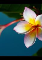 Tropical Star by Nate80