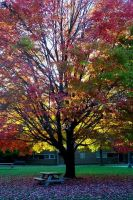 Quad Tree in the Fall by Jerbob